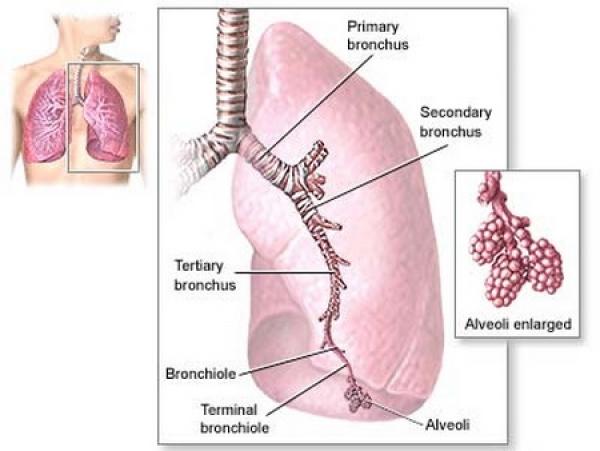 infectiile_cu_streptococcus_pneumoniae_pneumococul.jpg